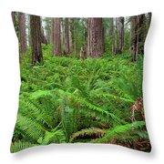 Ferns And Redwoods Throw Pillow