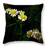 Feverfew In Bloom Throw Pillow