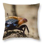 Fiddler Crab Living In A Sandy Tidal Throw Pillow