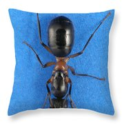 Field Ant Throw Pillow
