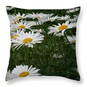 Field Daisies Throw Pillow