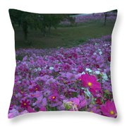 Field Of Flowers Along The Highway  Throw Pillow
