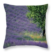 Field Of Lavender Throw Pillow