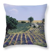 Field Of Lavender. Sault. Vaucluse Throw Pillow