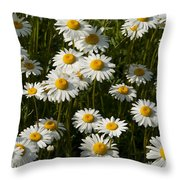 Field Of Oxeye Daisy Wildflowers Throw Pillow
