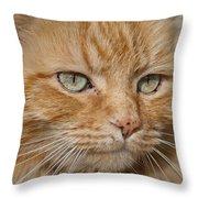 Fierce Warrior Kitty Throw Pillow