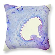 Fig, Developing Fruit Lm Throw Pillow