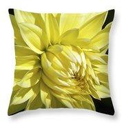 Figaro Yellow Dahlia Throw Pillow