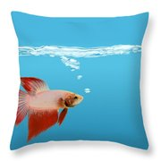 Fighting Fish Under Water Throw Pillow
