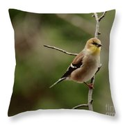 Finch Throw Pillow