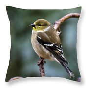 Finch In An Ice Storm Throw Pillow