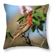 Finch In Lilac Bush Throw Pillow