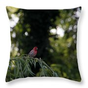 Finch In The Willow Throw Pillow