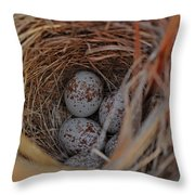 Finch Nest With Eggs  Throw Pillow