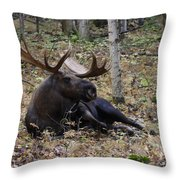 Fine Fellow Throw Pillow