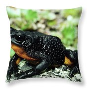 Fire-bellied Frog Atelopus Ignescens Throw Pillow