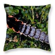 Firefly Larva Throw Pillow