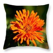 Firey Sunburst Throw Pillow