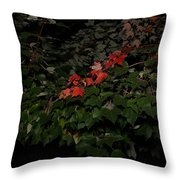 First Fall Colors At Night Throw Pillow