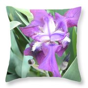 First Iris Of The Spring Throw Pillow