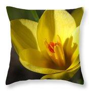 First Yellow Crocus Throw Pillow