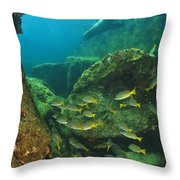 Fish And A Sea Lion In The Water At Los Throw Pillow