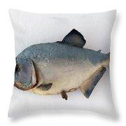 Fish Mount Set 04 A Throw Pillow