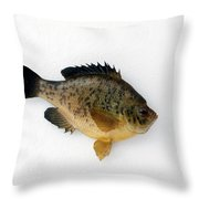 Fish Mount Set 08 A Throw Pillow