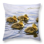 Five Goslings In The Water Throw Pillow
