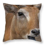 Flabbergasted Throw Pillow