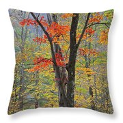 Flaming Fall Foliage Throw Pillow