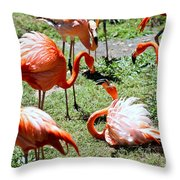 Flamingo Face-off Throw Pillow by Elizabeth Hart