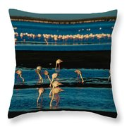 Flamingo Gathering Throw Pillow