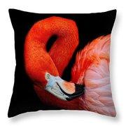 Flamingo Preening Throw Pillow