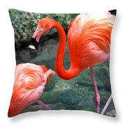 Flamingo River Walk Throw Pillow