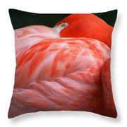 Flamingo Taking A Snooze Throw Pillow