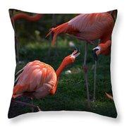 Flamingos Fight Throw Pillow