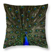 Flaunting The Colours  Throw Pillow