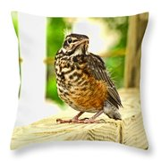 Fledling Robin Throw Pillow