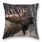 Flehmen Throw Pillow