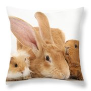 Flemish Giant Rabbit With Guinea Pigs Throw Pillow