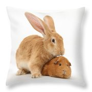 Flemish Giant Rabbit With Red Guinea Pig Throw Pillow