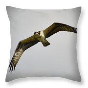 Flight Of The Osprey Throw Pillow