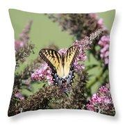 Flitter - Butterfly - Swallowtail Throw Pillow
