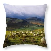 Flock Of Sheep Grazing In A Field Throw Pillow