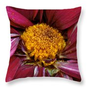 Flower - At The Center Of It All Throw Pillow