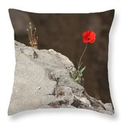 Flower By The Pool Of Bethesda - Israel Throw Pillow
