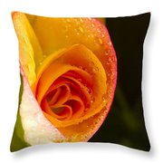 Flower Rieger Begonia 5 Throw Pillow