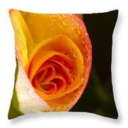 Flower Rieger Begonia 5 Throw Pillow