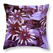 Flower Rudbeckia Fulgida In Uv Light Throw Pillow by Ted Kinsman
